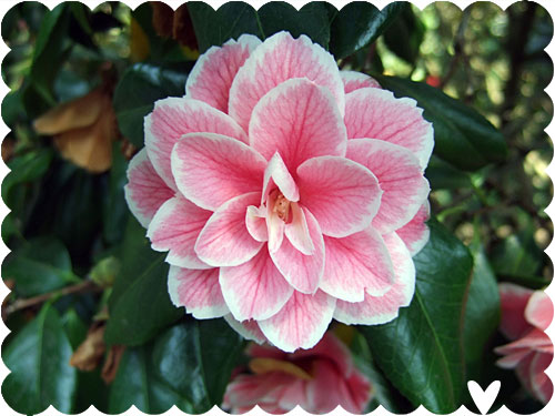 Its may asking for trouble since its a new month ive added some new stuff to the shop and reinstated card of the month this month is a pretty pink flower i photographed in kew mightylinksfo