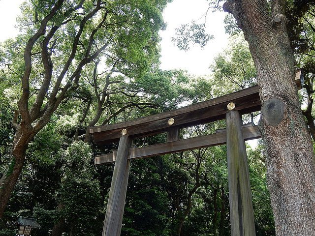 meiji shrine - marcelinesmith