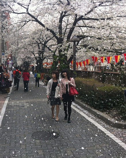Cherry-Blossom-in-Tokyo-along-the-river-at-Nakameguro