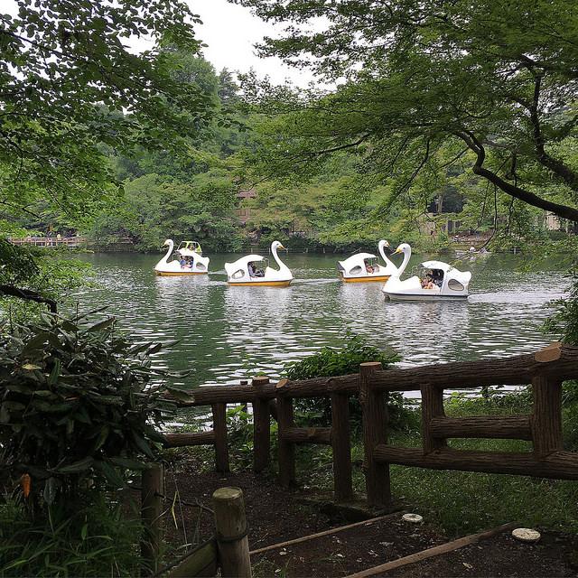 inokashira park - marcelinesmith