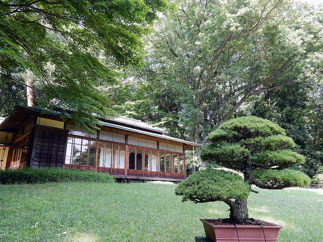 Meiji Shrine Gardens, Tokyo - marcelinesmith