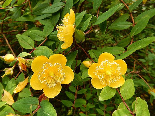 crarae garden - marcelinesmith