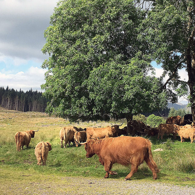 coos at taynuilt - marcelinesmith