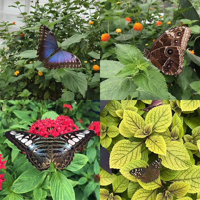 Butterfly house at St Andrews Botanic Garden