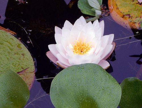 Kew Gardens - marcelinesmith
